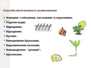 Стебловими живцями Стеблові живці – це частини пагона з кількома (4-5) бруньк