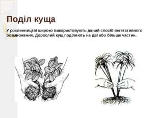 Відводками Відводки – це частини рослини, які людина утворює штучно, прихилив