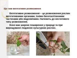 Природне вегетативне розмноження Природне вегетативне розмноження відбуваєть