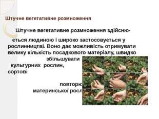 Основа вегетативного розмноження Вегетативне розмноження грунтується на явищ