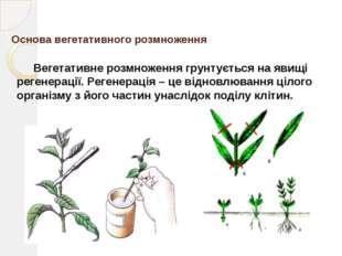 Результат У результаті вегетативного розмноження відбувається поява великої