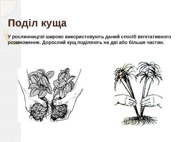 Відводками Відводки – це частини рослини, які людина утворює штучно, прихилив...