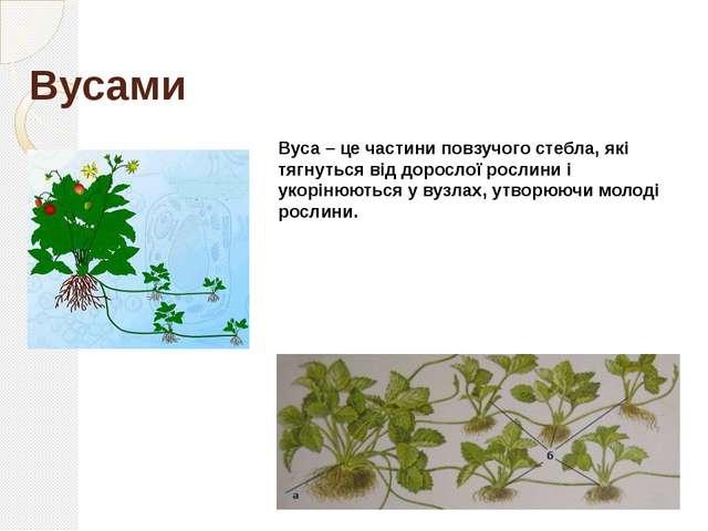 Виводковими бруньками Виводкові бруньки зустрічаються у рослин не часто. Це н...