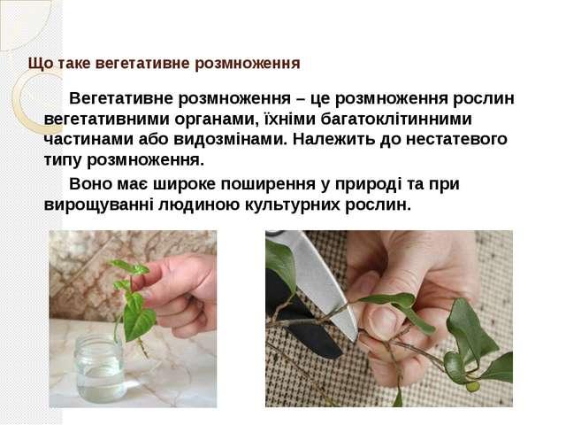Природне вегетативне розмноження Природне вегетативне розмноження відбуваєть...