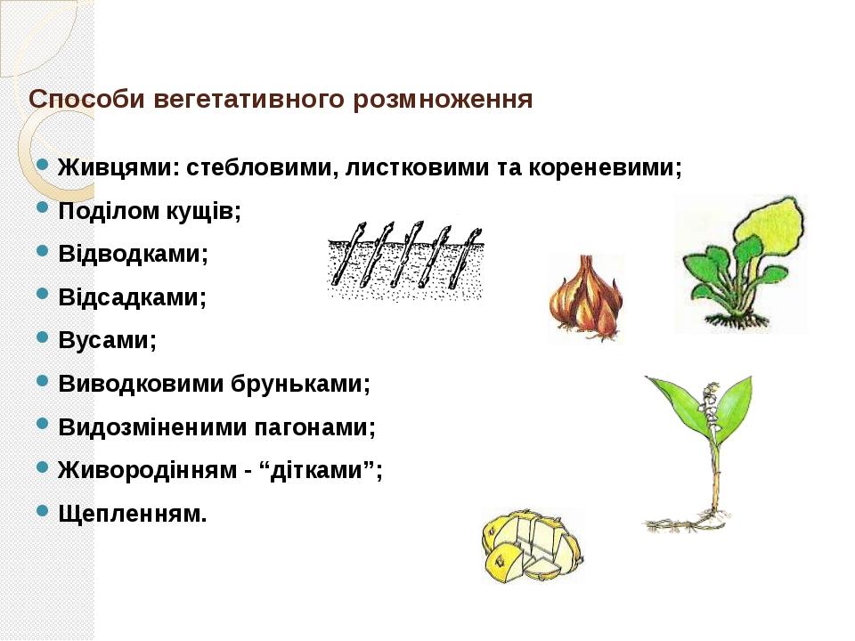 Стебловими живцями Стеблові живці – це частини пагона з кількома (4-5) бруньк...