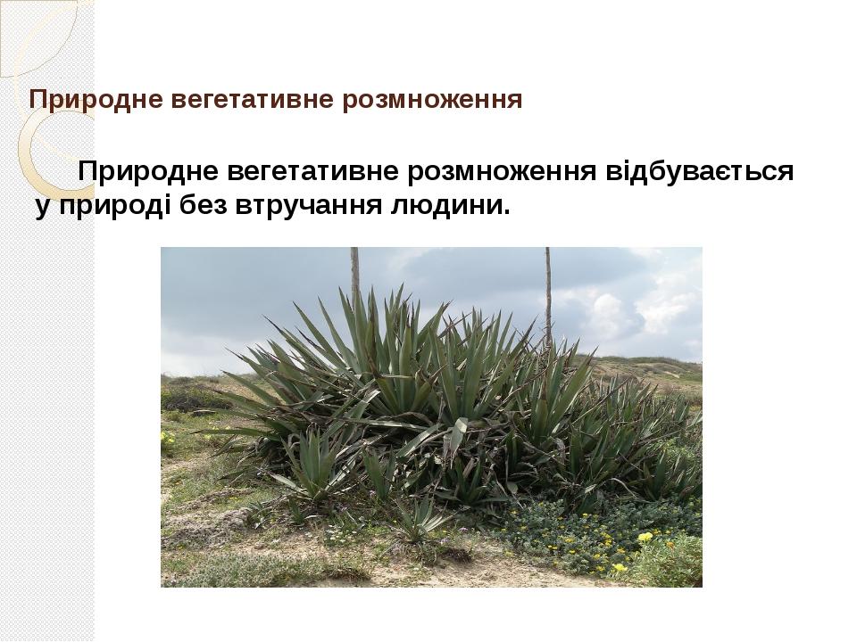 Штучне вегетативне розмноження Штучне вегетативне розмноження здійсню- ється...