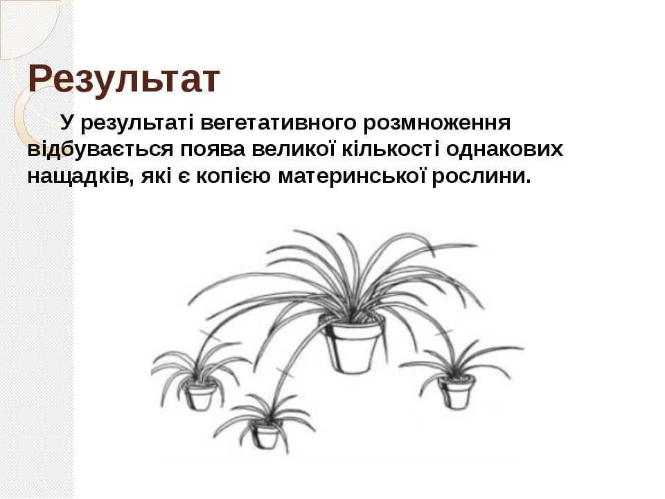 Способи вегетативного розмноження Живцями: стебловими, листковими та кореневи...