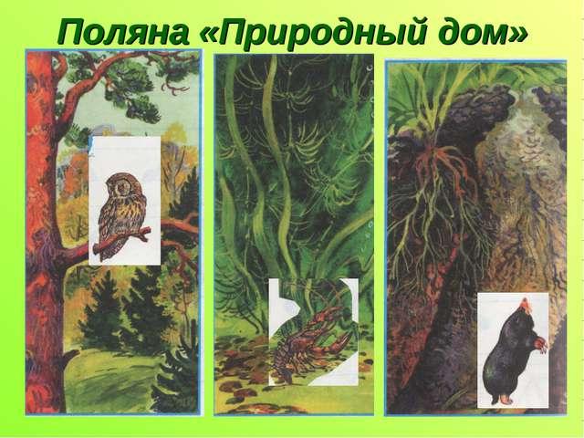 Поляна «Природный дом»