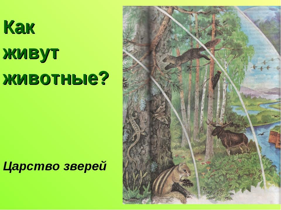 Как живут животные? Царство зверей