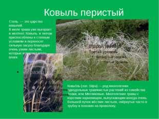 Ковыль перистый Ковы́ль (лат.Stipa)— род многолетних однодольных травянисты