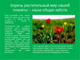 Беречь растительный мир нашей планеты – наша общая забота Всем растениям степ