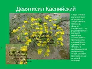 Девятисил Каспийский Среди степных растений часто встречаются лекарственные.