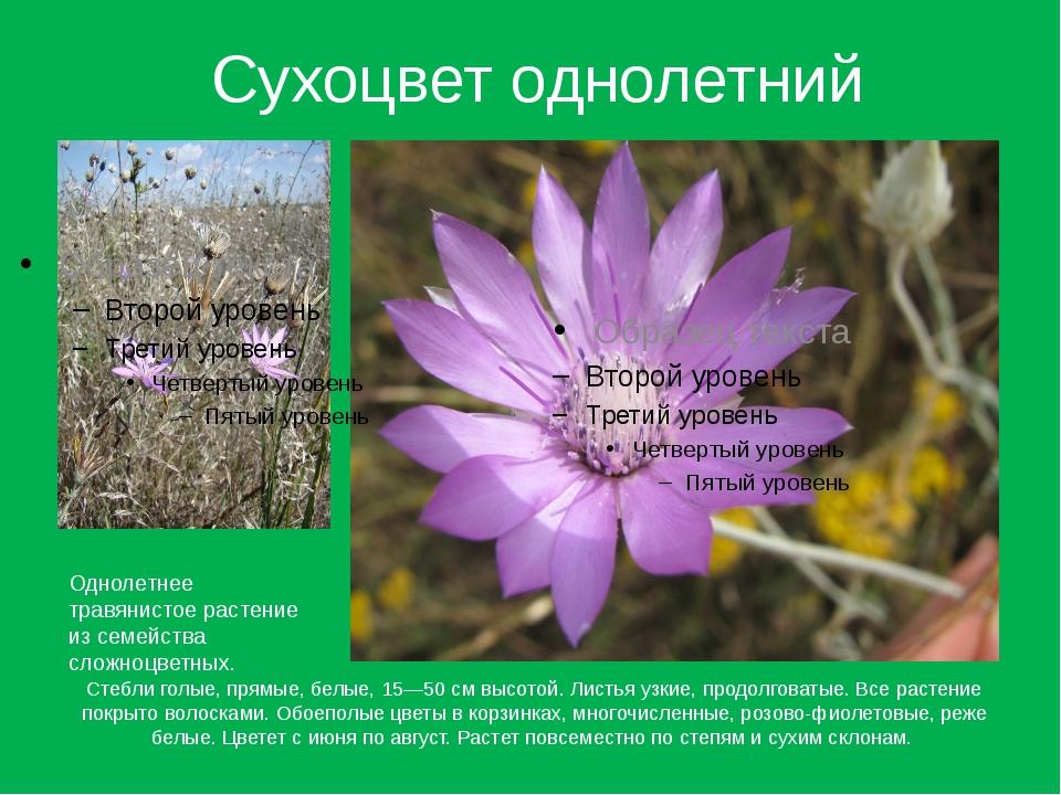 Сухоцвет однолетний Стебли голые, прямые, белые, 15—50 см высотой. Листья узк...