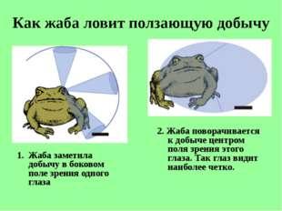 Как жаба ловит ползающую добычу Жаба заметила добычу вбоковом поле зрения од