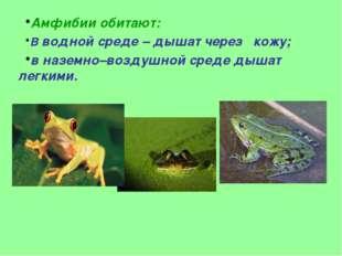 Амфибии обитают: В водной среде – дышат через кожу; в наземно–воздушной среде