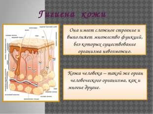 Гигиена кожи Кожа человека – такой же орган человеческого организма, как и мн