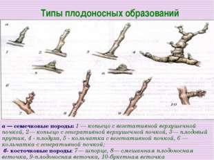 Типы плодоносных образований