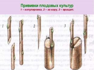 Прививки плодовых культур 1 – копулировка, 2 – за кору, 3 – вращеп.