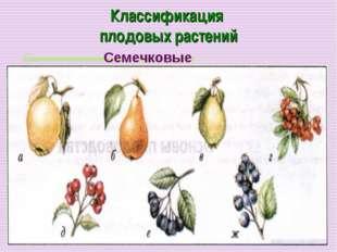 Классификация плодовых растений Семечковые