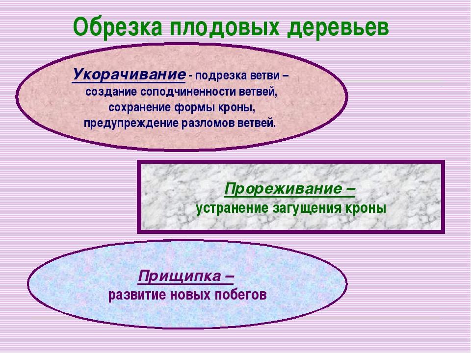 Обрезка плодовых деревьев Укорачивание - подрезка ветви – создание соподчинен...