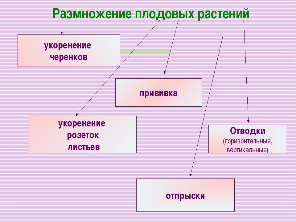 Размножение плодовых растений укоренение черенков прививка укоренение розеток...