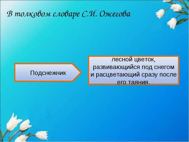 В толковом словаре С.И. Ожегова Подснежник лесной цветок, развивающийся под с...