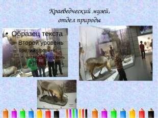 Краеведческий музей, отдел природы