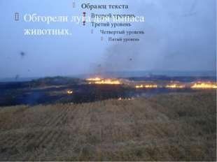 Обгорели луга для выпаса животных. 
