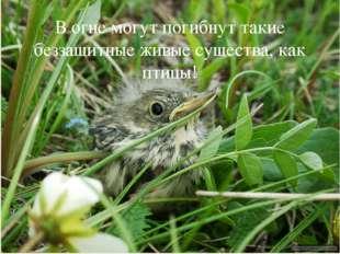 В огне могут погибнут такие беззащитные живые существа, как птицы! 