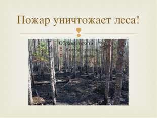 Пожар уничтожает леса! 