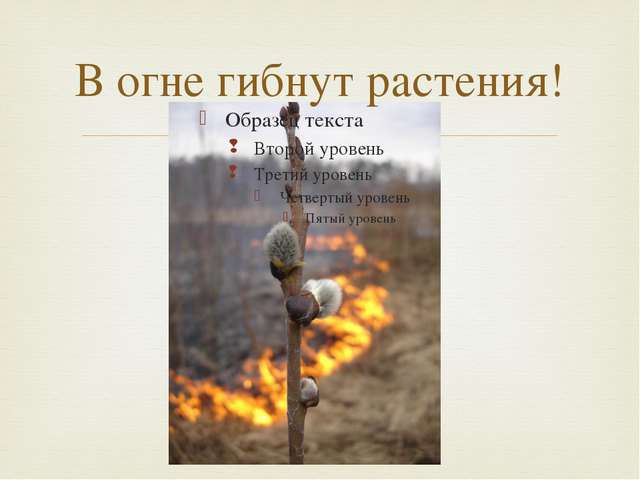 В огне гибнут растения! 