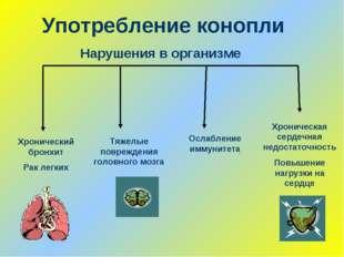 Употребление конопли Хронический бронхит Рак легких Нарушения в организме Хро