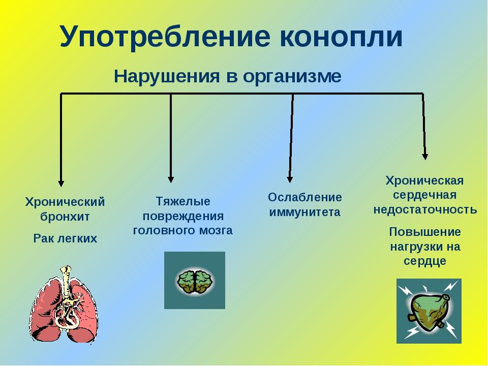 Употребление конопли Хронический бронхит Рак легких Нарушения в организме Хро...