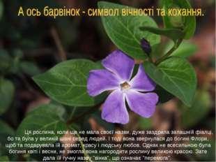 Ця рослина, коли ще не мала своєї назви, дуже заздрила запашній фіалці, бо т