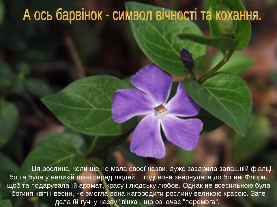Ця рослина, коли ще не мала своєї назви, дуже заздрила запашній фіалці, бо т...
