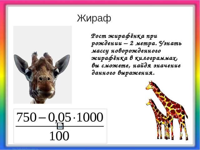 Рост жирафёнка при рождении – 2 метра. Узнать массу новорожденного жирафёнка...