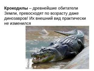 Крокодилы – древнейшие обитатели Земли, превосходят по возрасту даже динозавр