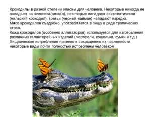 Крокодилы в разной степени опасны для человека. Некоторые никогда не нападают