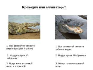Крокодил или аллигатор?! 1. При сомкнутой челюсти виден большой 4-ый зуб 1. П