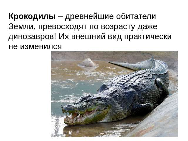 Крокодилы – древнейшие обитатели Земли, превосходят по возрасту даже динозавр...