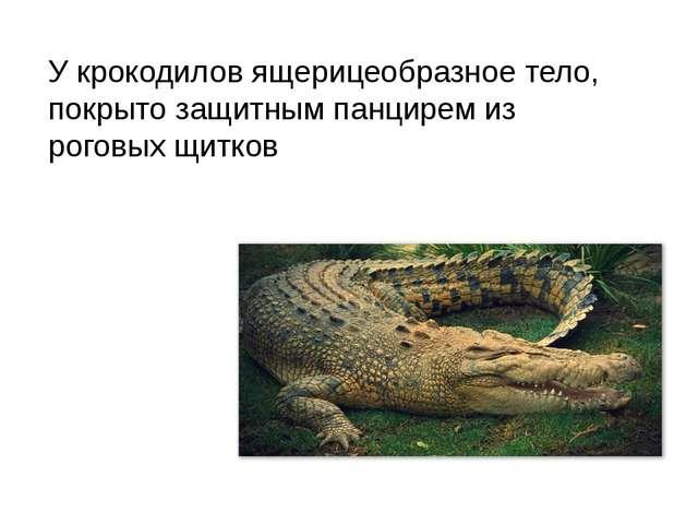 У крокодилов ящерицеобразное тело, покрыто защитным панцирем из роговых щитков
