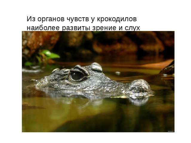 Из органов чувств у крокодилов наиболее развиты зрение и слух