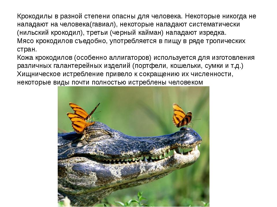 Крокодилы в разной степени опасны для человека. Некоторые никогда не нападают...