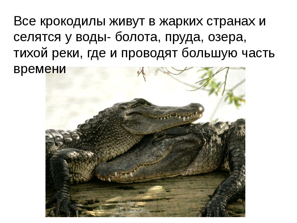 Все крокодилы живут в жарких странах и селятся у воды- болота, пруда, озера,...