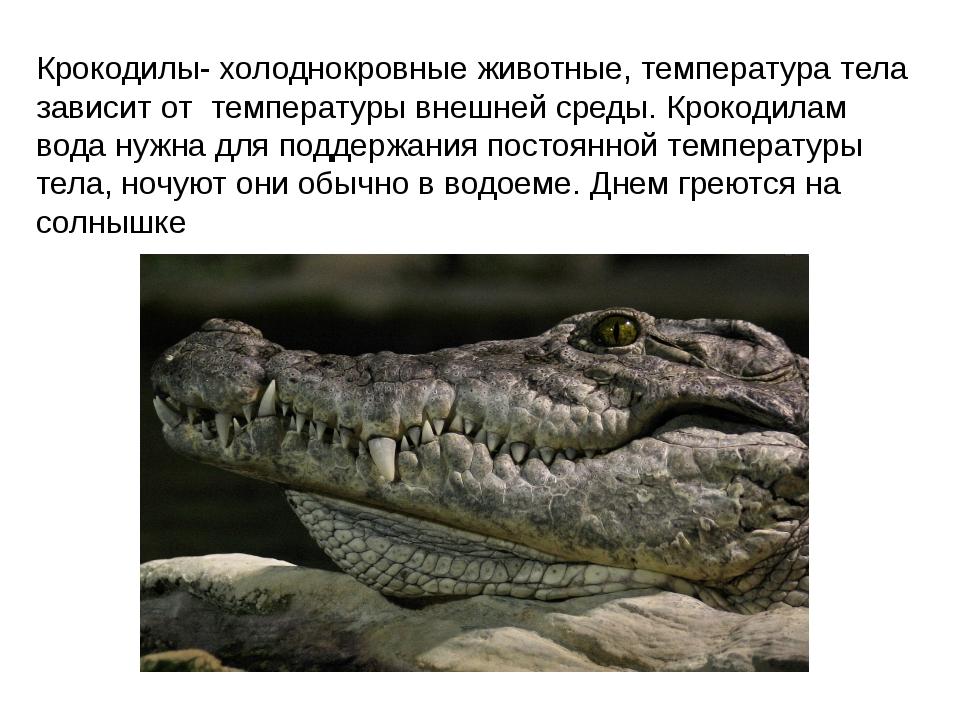 Крокодилы- холоднокровные животные, температура тела зависит от температуры в...