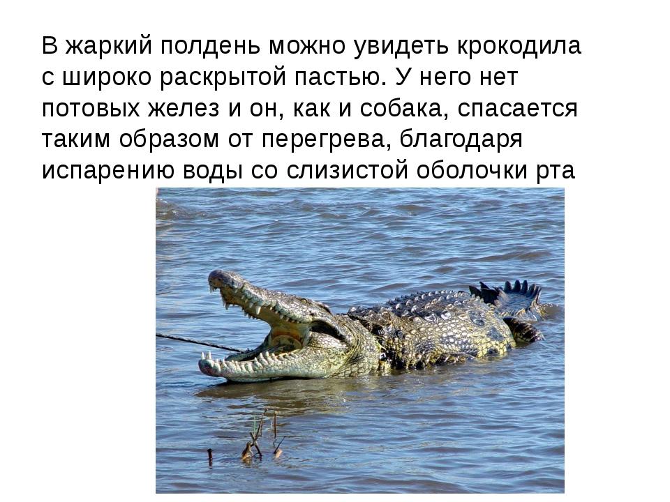В жаркий полдень можно увидеть крокодила с широко раскрытой пастью. У него не...