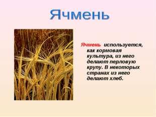 Ячмень используется, как кормовая культура, из него делают перловую крупу. В