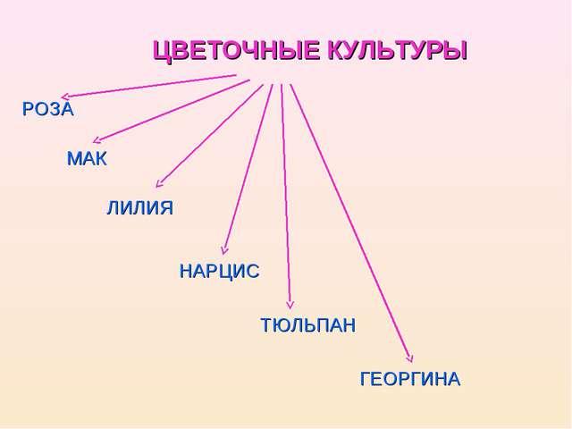 ЦВЕТОЧНЫЕ КУЛЬТУРЫ РОЗА МАК ЛИЛИЯ НАРЦИС ТЮЛЬПАН ГЕОРГИНА