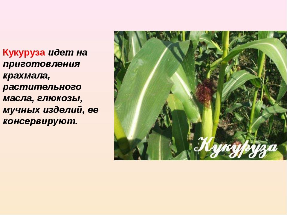 Кукуруза идет на приготовления крахмала, растительного масла, глюкозы, мучны...