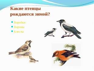 Какие птенцы рождаются зимой? Воробьи Вороны Клесты